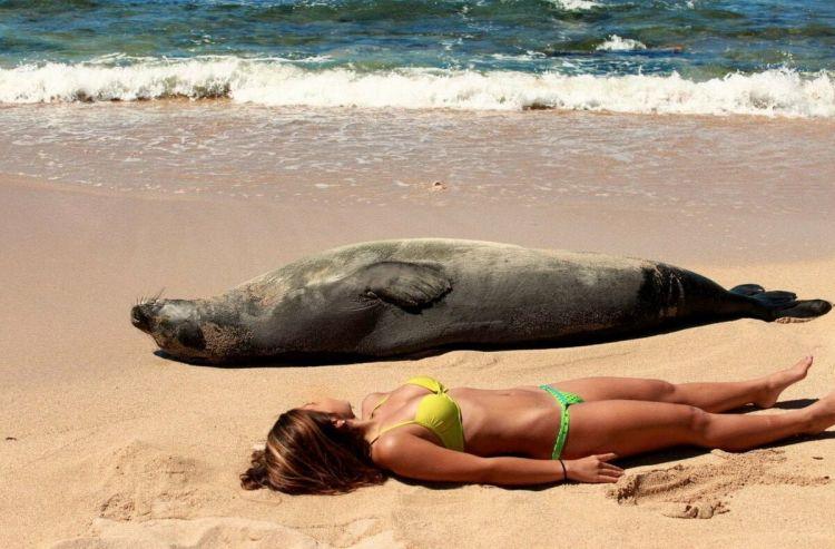 смешные фото с пляжа