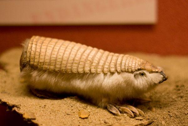 Виды животных о которых вы никогда не слышали, 20 фото