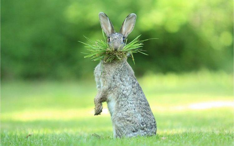 50 уморительных фото животных, на которых невозможно смотреть серьёзно