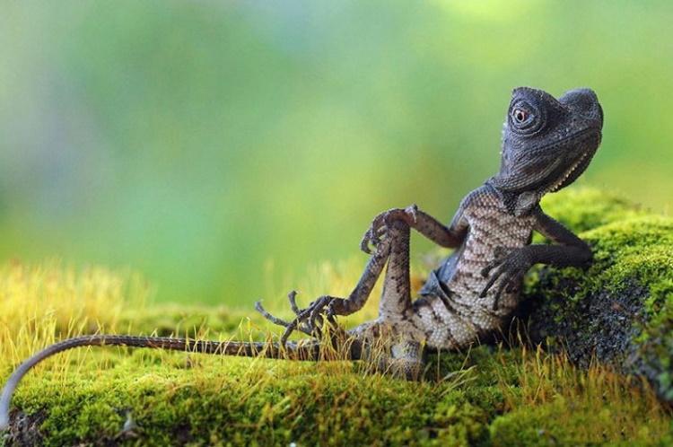 Животные, фотогеничности которых позавидует каждый