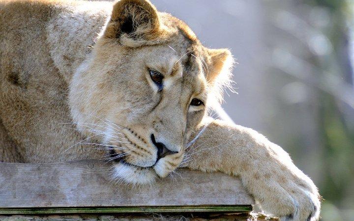 30 животных, по которым легко разгадать эмоции
